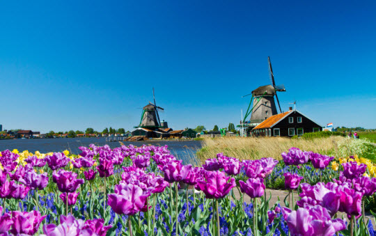 Windmills-in-the-Netherlands