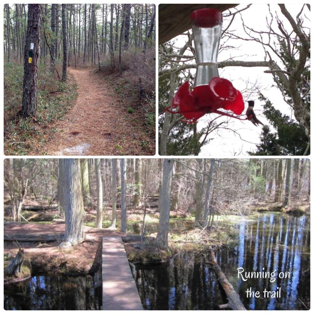 trail collage